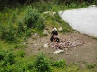 熊猫1_097598_097901.jpg