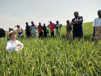 杨华德在田间为学员们讲解稻草还田效果及技术要点。(杨华德提供_087844.jpg